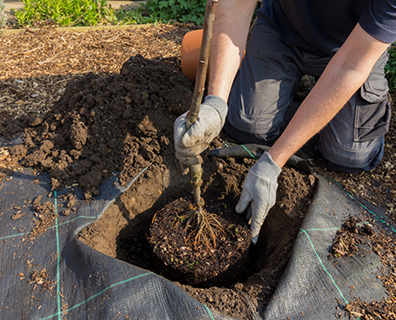 Featured image for How to Take Care of a Newly Planted Tree (5 Easy Steps)