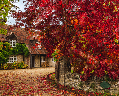 Featured image for Fall Foliage: Best Trees and Shrubs for Red Fall Color