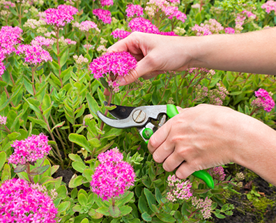 Featured image for Perennial Plant Care: What You Need to Know About Cutting Back Perennials