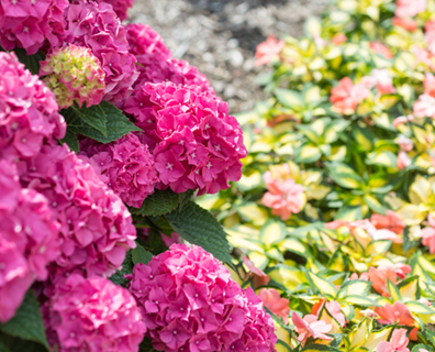 Featured image for Best Small Flowering Trees for Your Landscape