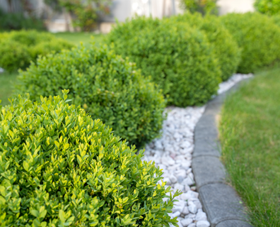 Featured image for Landscape Favorites: Best Slow and Fast Growing Shrubs