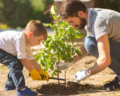 Featured image for Tips and Tricks on How to Plant Trees in the Spring