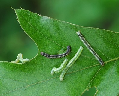 Featured image for Round Up: Common Native Tree Pests & Diseases in the South