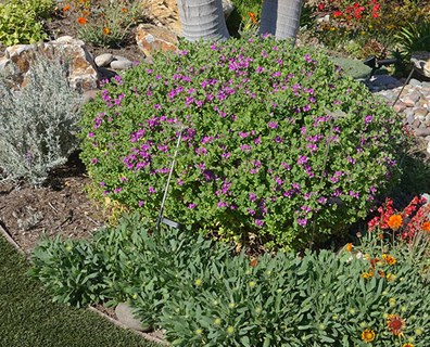 Featured image for How to Keep Your Landscape Resilient During Seasonal Summer Drought