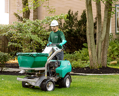 Featured image for Lawn Aeration and Overseeding Aftercare