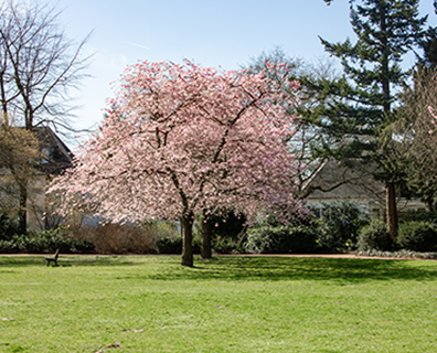Featured image for Best Trees to Plant for Shade for Your Front & Back Yard