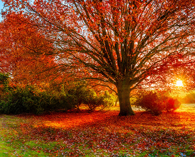 Featured image for Best Oak Trees To Plant for Color
