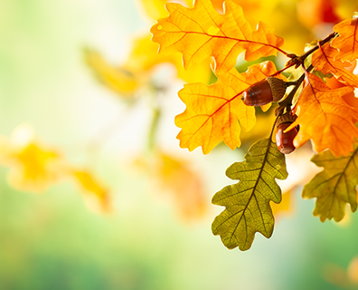 Featured image for Tree Care Checklist: How to Keep Trees Healthy This Fall