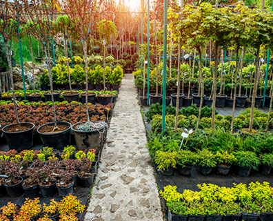 Featured image for Guide on How to Choose A Tree to Plant: Planning & Selecting