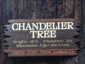 ChandelierTreesign