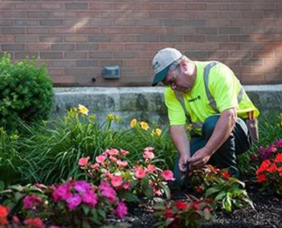 Wondering how your landscape can benefit from annuals? Davey's Commercial Landscape Services Division has some tips for you!