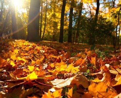 Here are five fall landscape tips from the certified arborists at The Davey Tree Expert Company to ensure your yard is ready for winter: