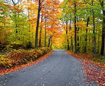 The 10 Best Trees For Brilliant Fall Foliage