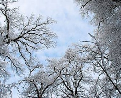 Follow these three steps to help your trees remain strong throughout the winter season and prepare for proper spring growth.
