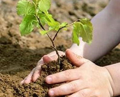 Plant a tree for National Arbor Day!