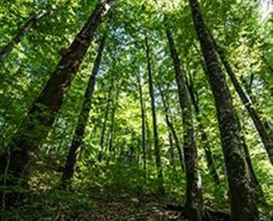 Natural sunlight powers photosynthesis, a process by which plants eat.
