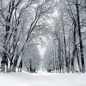 We've seen plenty of snow on the trees this winter all across the U.S. and Canada.