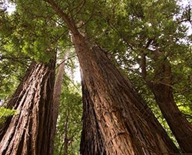Muir Woods National Monument is one of nearly 400 parks in the U.S. National Park System.