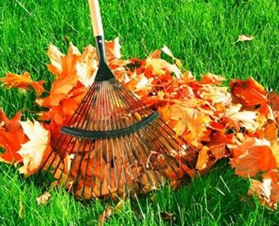Featured image for To Rake or Not to Rake