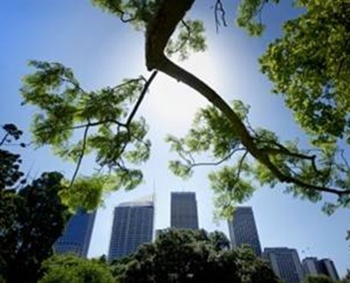 Featured image for City Trees Can Get By With a Little Help From Their Friends