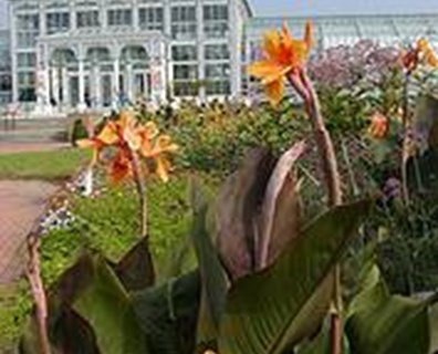 Summer blooms at Lewis Ginter Botanical Garden. Photo: Lewis Ginter Botanical Garden