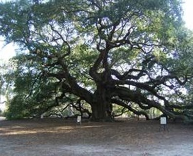 Featured image for From Snow Angels to the Angel Oak