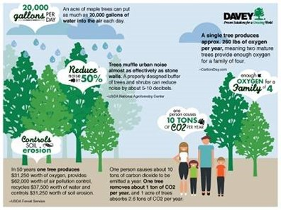 Some tree benefits are less obvious than others. Check out two TREE-mendous infographics to learn more about what your trees can do for you.
