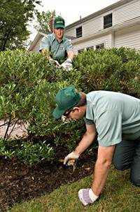 shrub pruning - davey