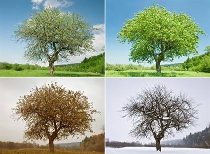 trees through seasons - WEB