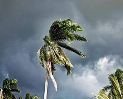 Protect your trees from high winds and stressful weather with these storm prep practices.