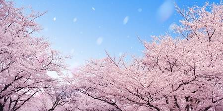 Flowering trees, pink blossoms