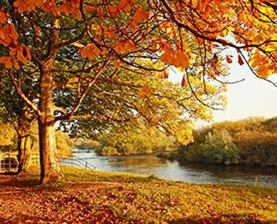 Fall is right around the corner. What are you most excited for... vibrant, healthy trees?
