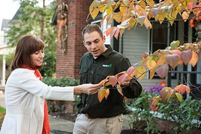Davey identifies the signs and symptoms of common Fall pests.