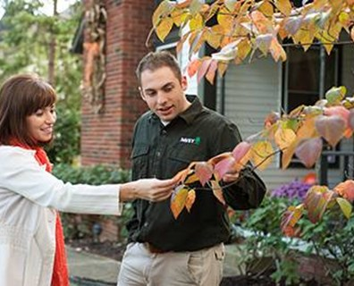 Wondering if your tree is sick? See what's wrong with your tree.