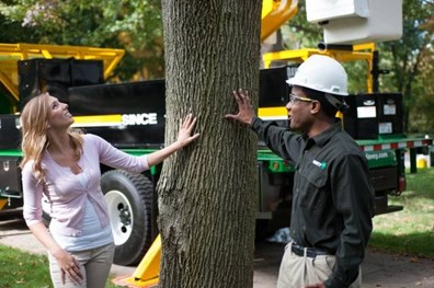 What's wrong with your tree? Here are the 5 top most common tree problems and solutions.