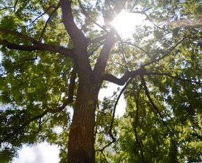 Use our 3-step seasonal summer checklist to keep your trees strong and safe this summer.