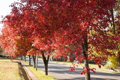 Fall foliage creates beautiful outdoor scenery this time of year. But simply admiring trees' beauty won't ensure good health in coming seasons.