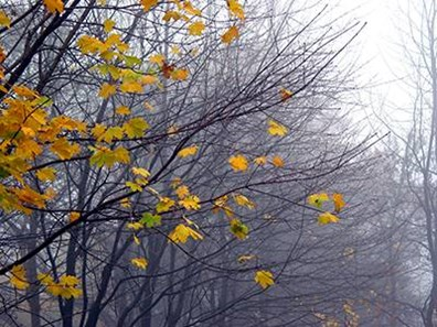 Want to enjoy your trees in all four seasons? Remember proper tree care matters all year long.