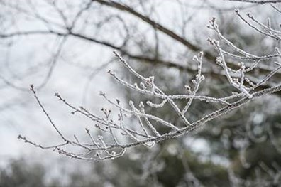 What you can do to prevent ice damage on your trees