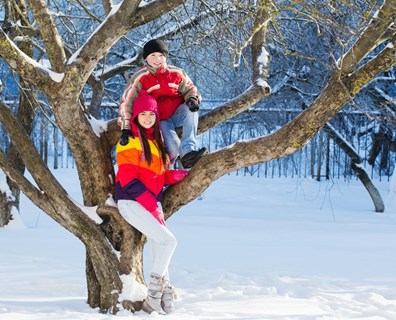 These 11 tips and other winter tree service resources will help you keep your trees healthy all winter long.