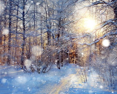 You can't predict winter weather. But you can help prepare your trees for the frosty season ahead.