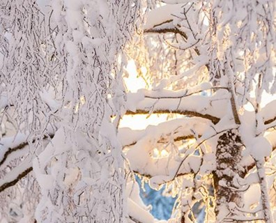 Know the signs of possible snow damage to your trees this winter.