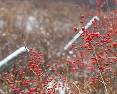 For those of us who suffer a snowy season in winter, adding natural pops of color to the landscape is refreshing.