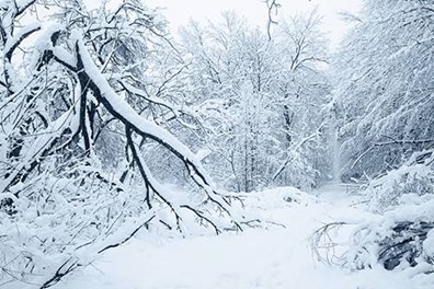 How can you help your trees survive winter weather extremes without suffering from branch breakage?