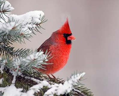It's possible to attract a variety of bird and other wildlife species to your landscape in winter. First consider the tree and shrub species existing in your yard.