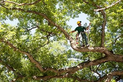 Prune dead, diseased or broken branches to keep trees and shrubs structurally strong, so they can withstand damage from severe weather all year long.