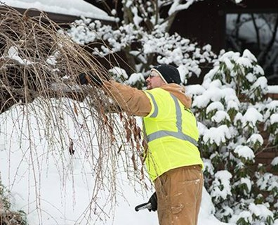 Although your trees temporarily stop growing in winter, you should continue tree maintenance and monitoring to ensure your trees are healthy all year long.