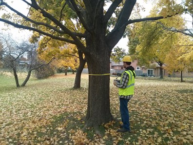 Just what does it take to determine the health conditions of a tree? Here, Davey Resource Group's Dan Marina helps perform a tree inventory for Toronto Parks.