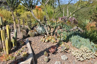 Drought resistance refers to different meanings, depending on the location in which particular plants thrive. It's important to know how the plant material in your landscape reacts to drought conditions.