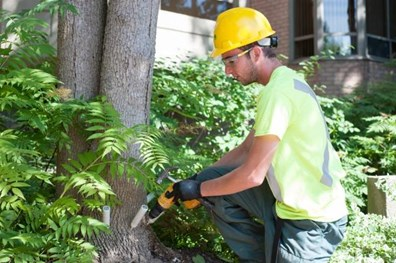Do you know how to determine whether your tree is affected by an invasive pest or disease? Here, a Davey Canada employee treats an ash tree at the Winfield Terrace Retirement Home.